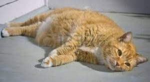 tabby colored cat